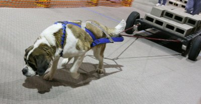 Concrete Forms For Sale >> MMBC UKC Weight Pull